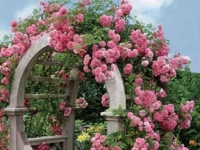 Atelier Amaryllis Romantikgarten